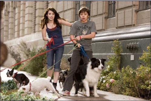 hotel-para-perros1