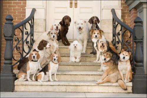 hotel-para-perros9